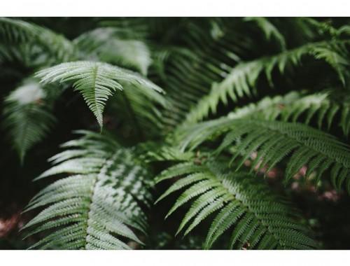 ferns by xanthe berkeley