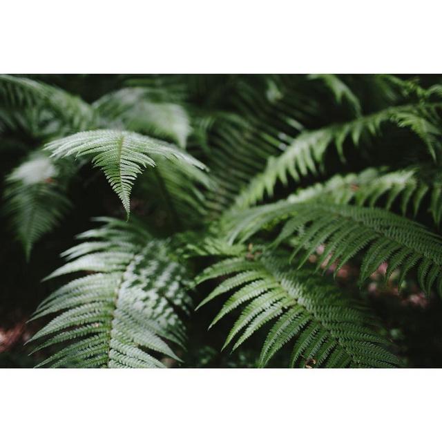 xanthe berkeley instagram ferns